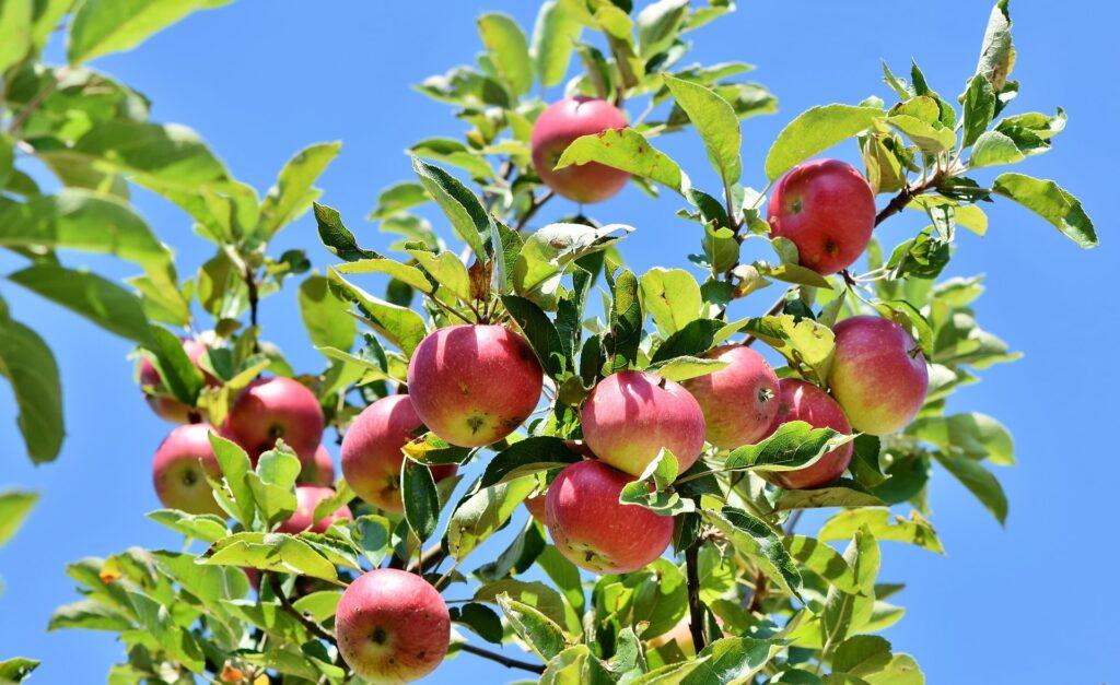 arbres-fruitiers-