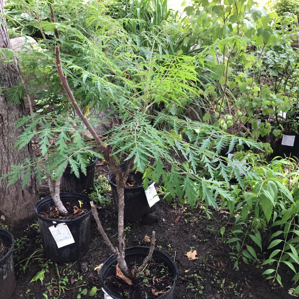 pepiniere-des-hauteurs plantes